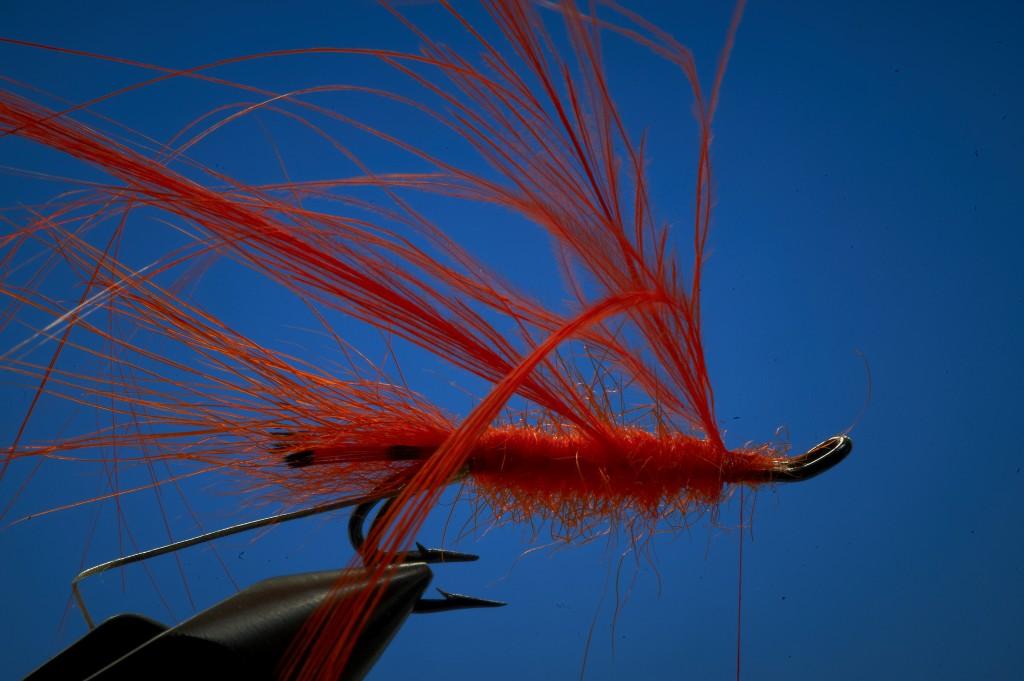 tying shrimp fly
