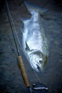 Collie Dog Salmon fly