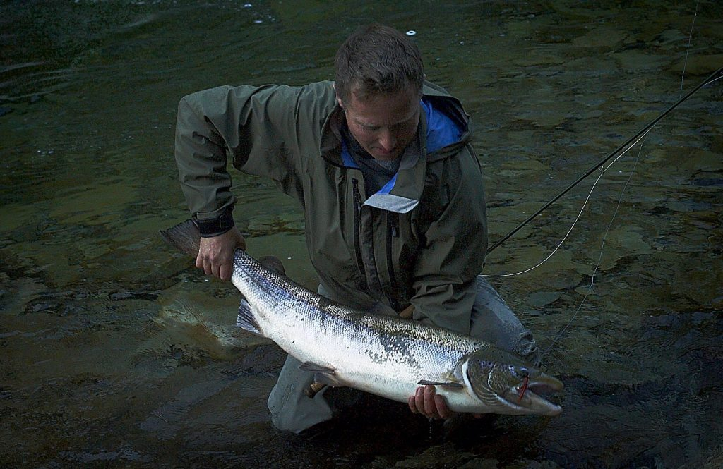 Big male salmon from August