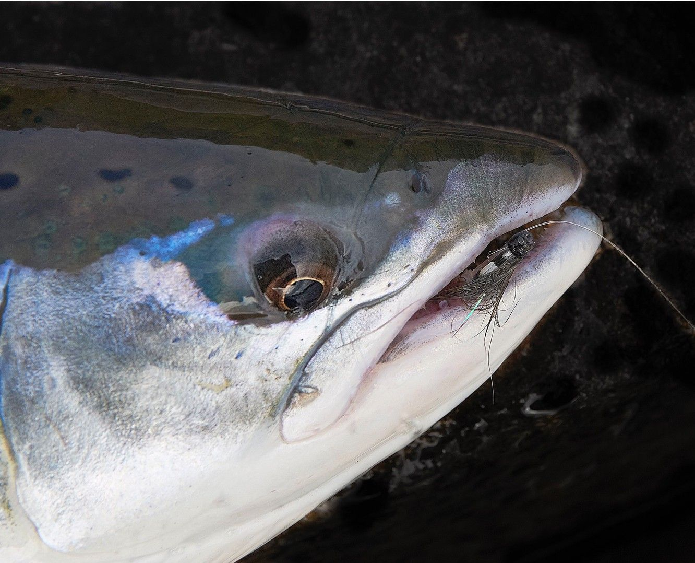 Riffling hitch salmon dry fly steelhead wake fly