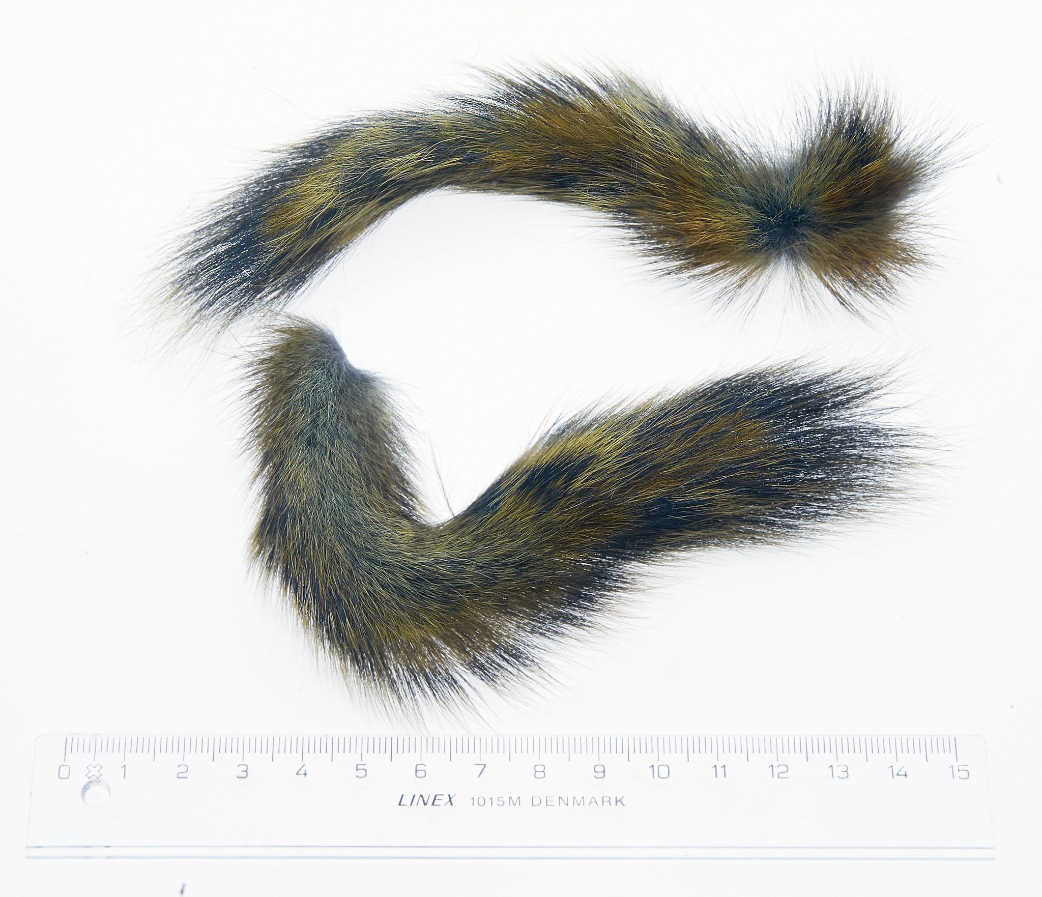 Pine squirrel for salmon flies