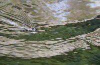Riffling hitch fishing