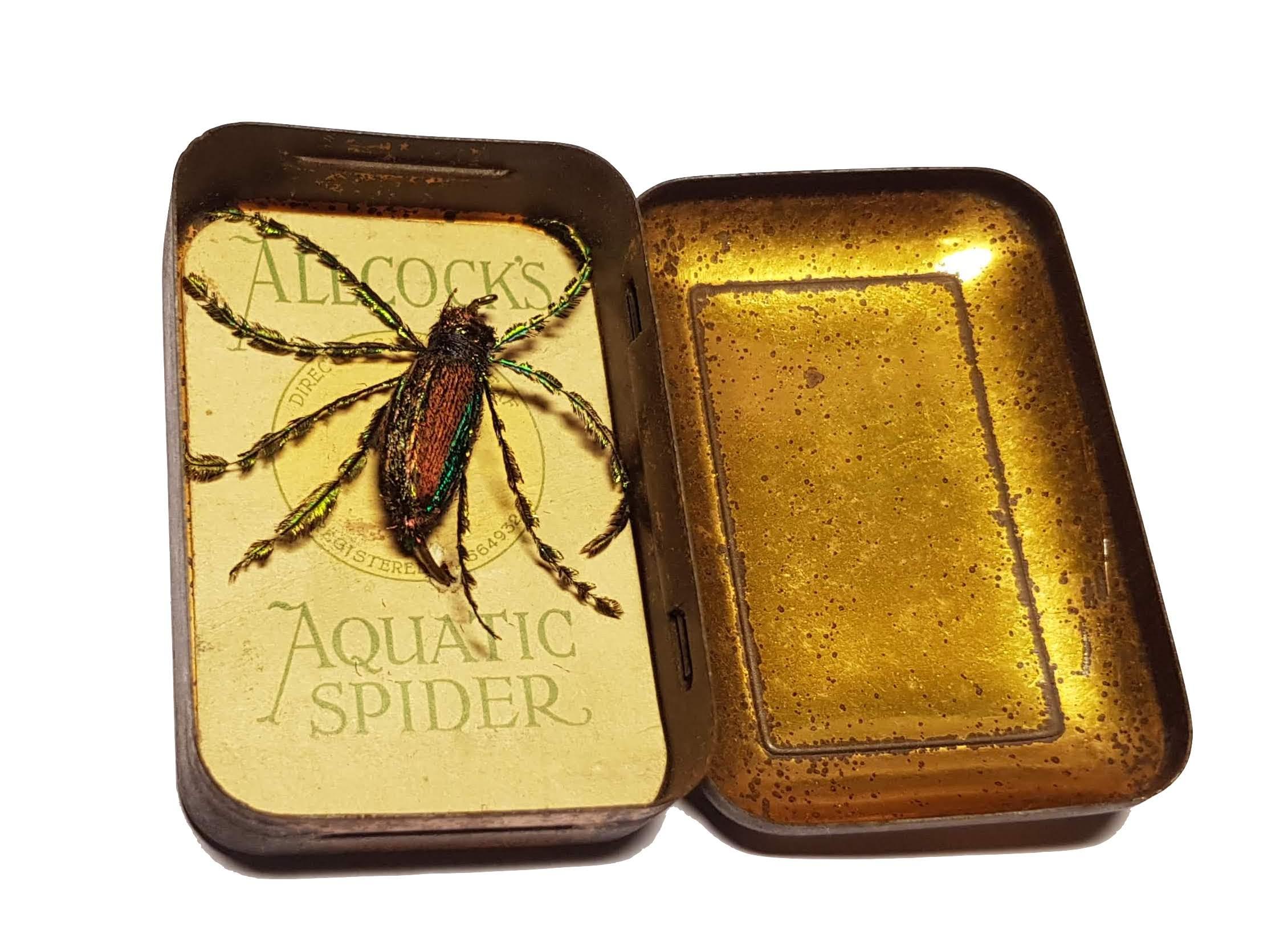 Allcock's Aquatic Spider