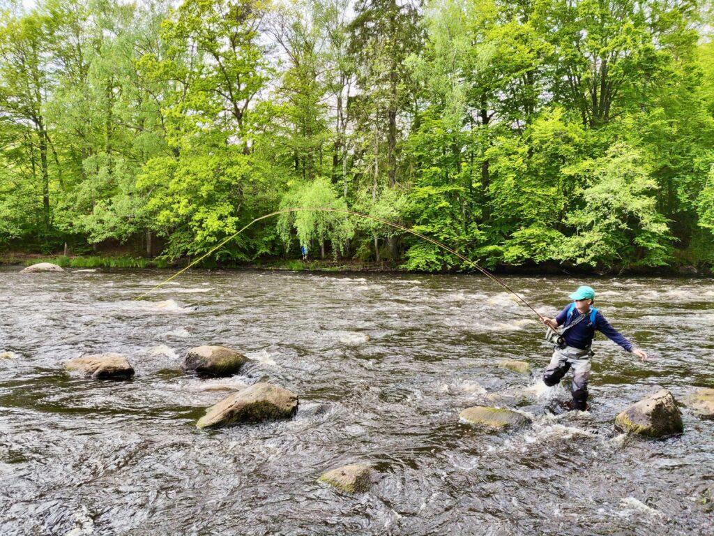 Fly fishing Morrum River